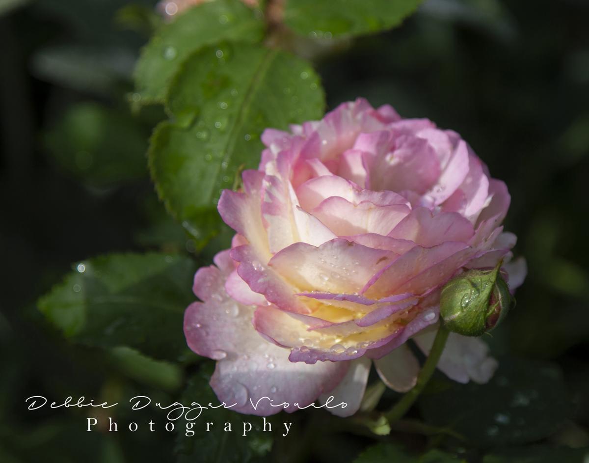 Flower by Debbie Duggar
