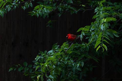 A Splash of Red by Anita Freeman