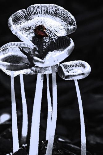 Abstract Fungi by Kathy Thalman