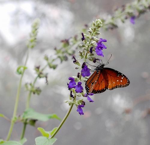 Annabutterfly