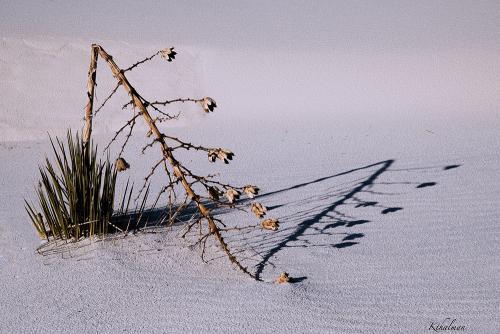 Broken Yucca at White Sands by Kathy Thalman