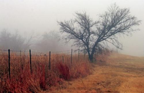 Crazy Fog by Anita Page