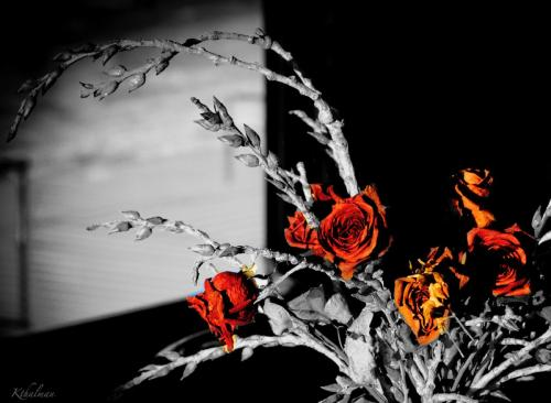 Dried Roses by Kathy Thalman