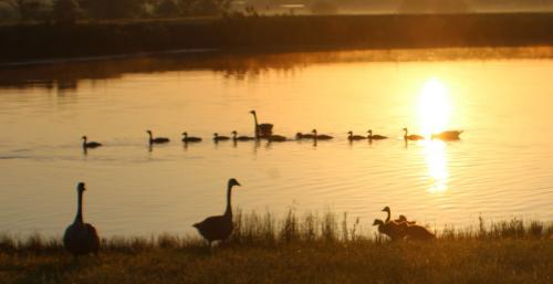 Ducks in a Row by Jodie Gisinger