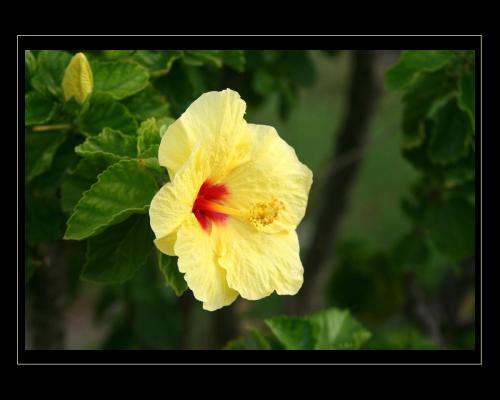 Flower 09