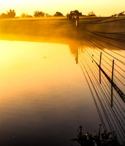 Golden Pond by Jodie Gisinger