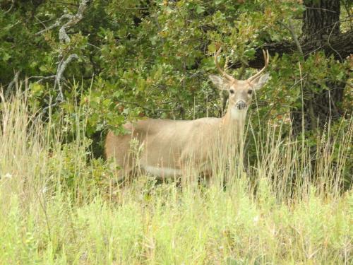 Spotting a deer near Lost Lake by Gil Helland