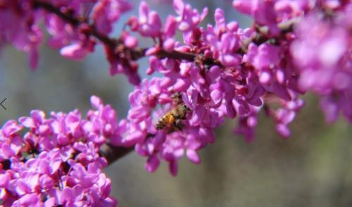 Spring Bees by Jodie Gisinger