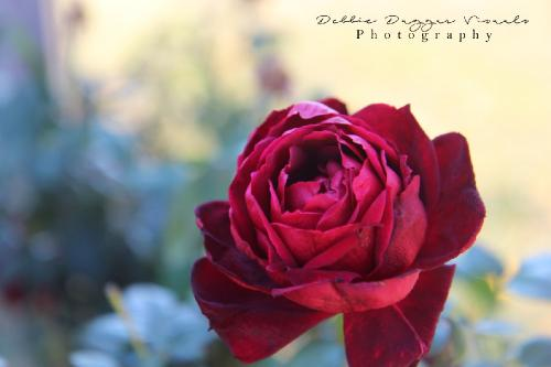 The color red by Debbie Duggar
