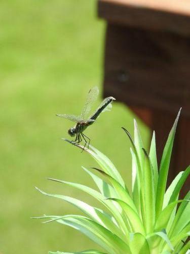 Dragonfly by Gil Helland