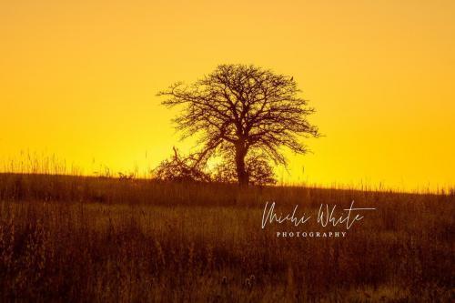 Yellow skyline by Michi White